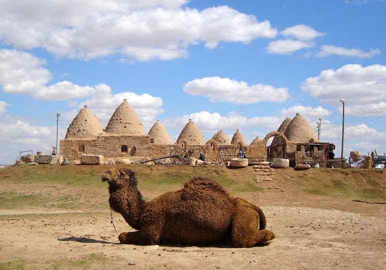 גמל כורע על ברכיו וברקע העיר חרן (עירו של אברהם). דמיינו את עשרת הגמלים של  עבד אברהם כורעים על ברכיהם