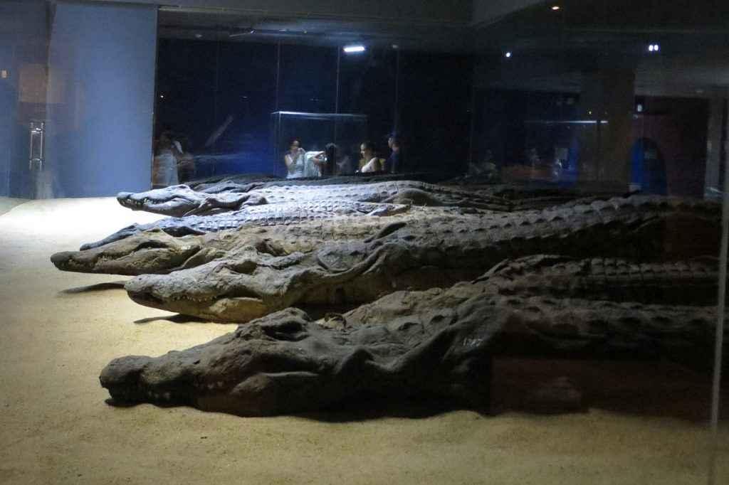 תנינים במוזיאון